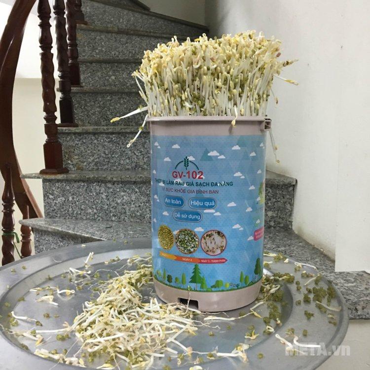 Giá sạch làm từ thiết bị GV-102 chứa nhiều chất dinh dưỡng