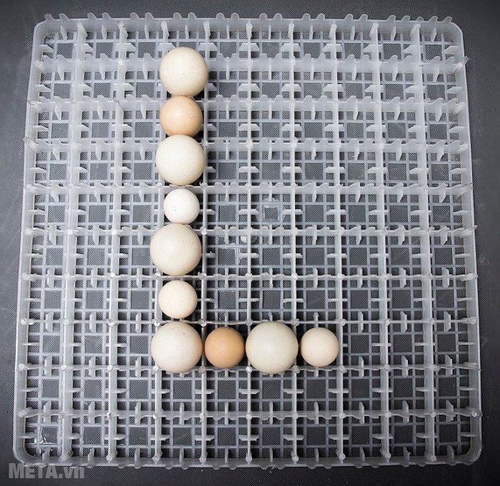 Máy ấp trứng 100 trứng Convection Lic-100 có thể xếp 100 trứng 1 khay