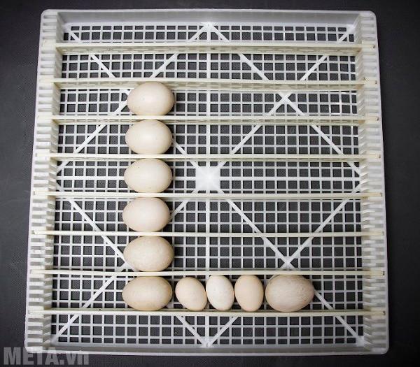 Máy luôn giữ trứng ở môi trường nhiệt độ phù hợp cho quá trình trứng nở
