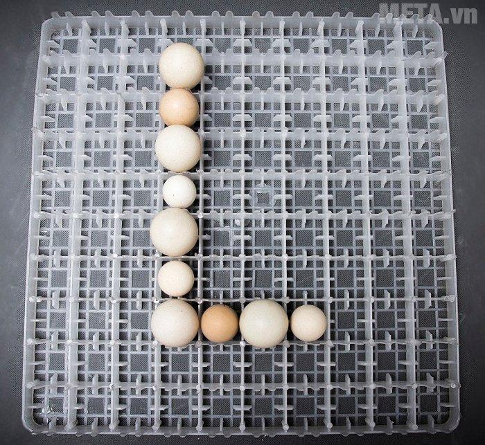 Máy ấp trứng điều áp BALANCE Lin LDI-200 sử dụng loại khay trứng K100 định vị 100 trứng đứng.