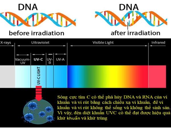 Nguyên tắc hoạt động của đèn diệt khuẩn UV