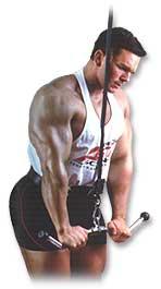 Một số bài tập cơ bản về cơ tay dành cho nam