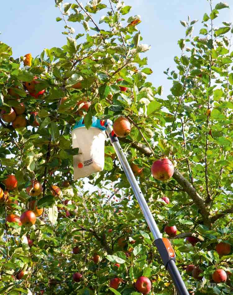 Đầu giỏ hái quả Gardena 3110-20 có thể hái các loại trái cây trên cao.