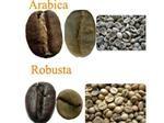 Phân biệt cà phê Arabica và Robusta