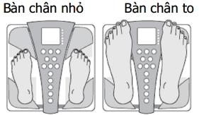 Cân sức khỏe và phân tích cơ thể BC-543