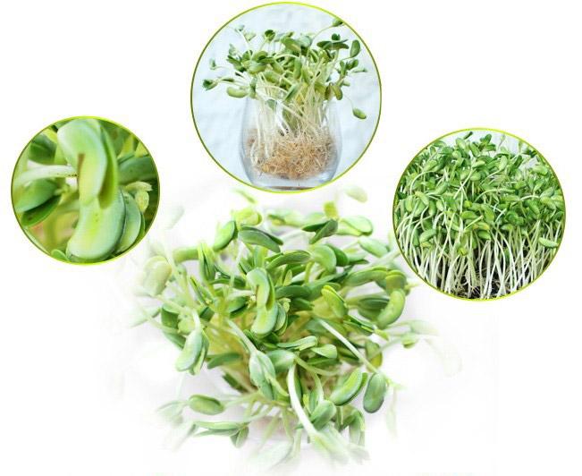 Hạt giống máy trồng rau mầm