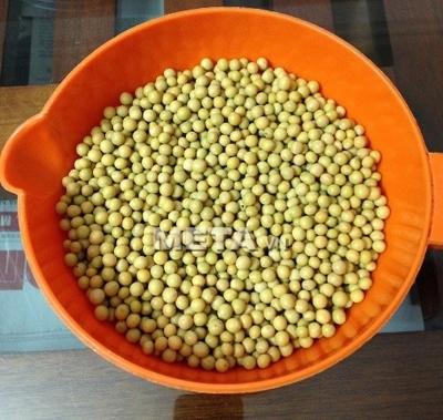 Chuẩn bị hạt giống đậu nành