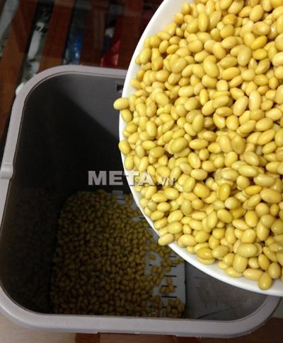Cho hạt đậu nành vào máy làm giá đỗ GV-102 - phiên bản tự động