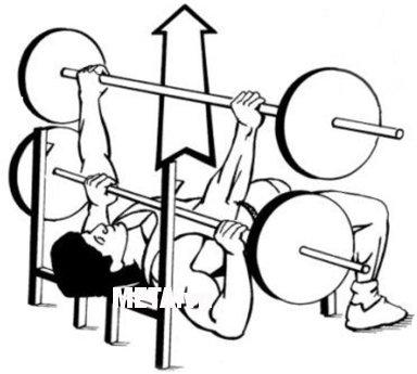 Hình minh họa nằm đẩy tạ đòn trên ghế phẳng