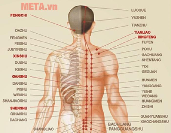 Ghế massage toàn thân tokuyo TC 366 có khả năng tự động dò tìm tới các huyệt đạo trên cơ thể