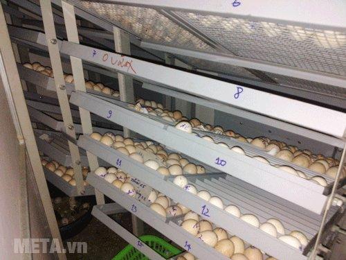 Máy ấp trứng Matech có khay ấp bằng thép sơn tĩnh điện
