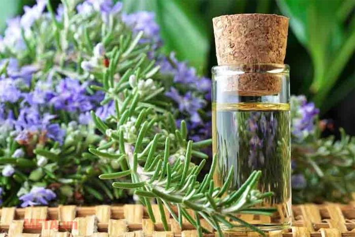 Mùi thơm của tinh dầu hương thảo giúp kháng khuẩn và làm sạch không khí khi được khuếch tán.