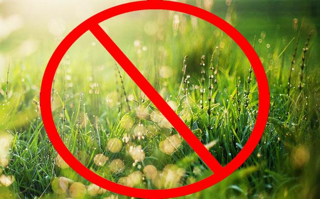 Những mẹo diệt cỏ dại đơn giản và tự nhiên bạn nên biết
