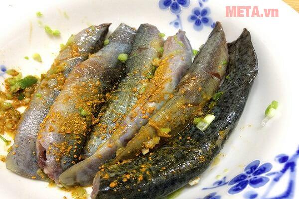 Thịt cá chạch