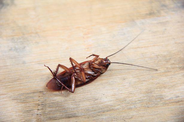 Gián, chuột, các loại côn trùng cũng là nguyên nhân khiến phòng ngủ có mùi