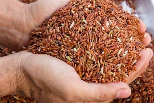 Ăn gạo lứt hàng ngày có tốt không?