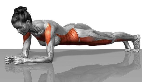 Plank giúp săn chắc hệ cơ trong cơ thể
