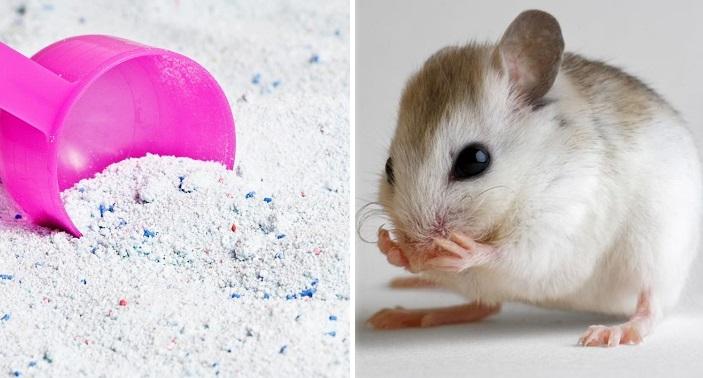 Cách đuổi chuột trong nhà hiệu quả bằng bột giặt