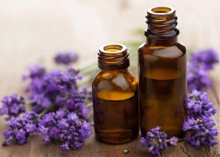 Tinh dầu oải hương Lavender có thể giúp cải thiện giấc ngủ