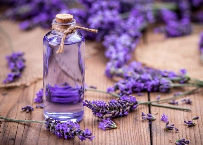 Tinh dầu hoa oải hương còn có tác dụng không ngờ trong hỗ trợ điều trị tiểu đường