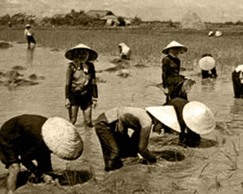 Hình ảnh người phụ nữ Việt Nam chăm chỉ, cần cù