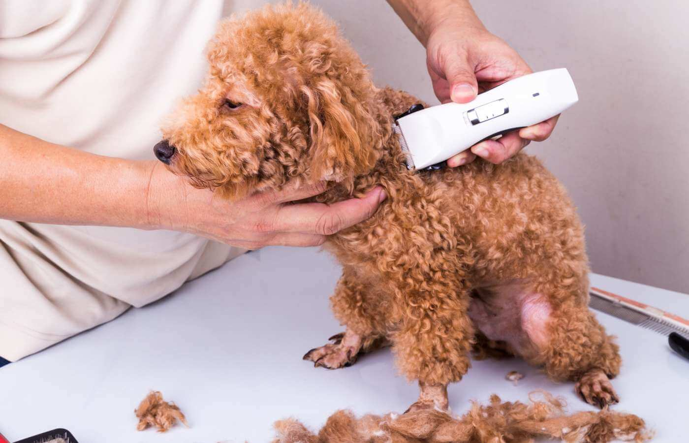 Tông đơ cắt lông chó