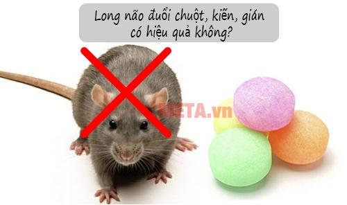 Long não là gì? Long não đuổi chuột, gián, kiến có hiệu quả không?