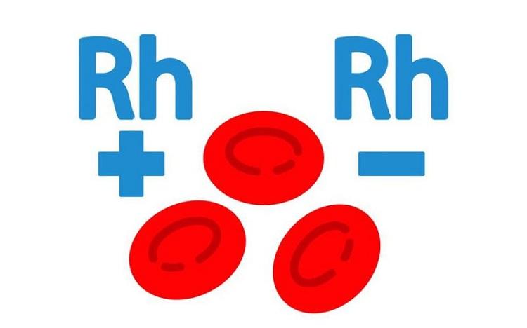 Đặc điểm của nhóm máu O là gì? Có bao nhiêu loại nhóm máu O?