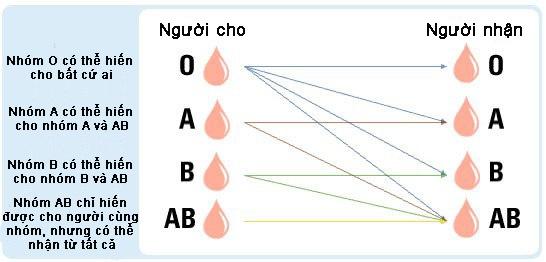 Đặc điểm của nhóm máu O là truyền được cho mọi nhóm máu