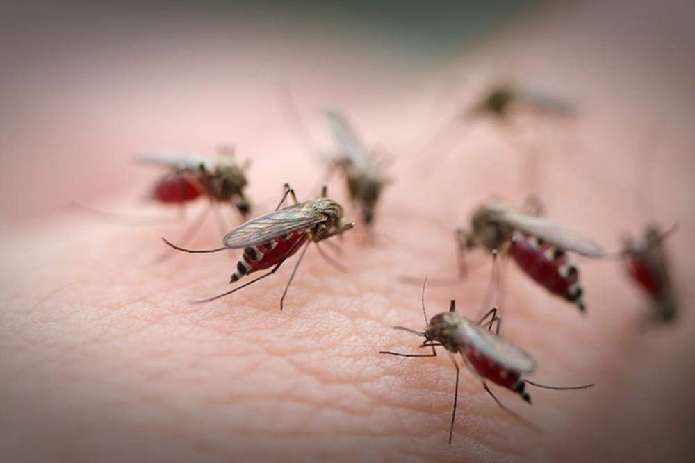 Nhóm máu O thường thu hút muỗi nhiều hơn