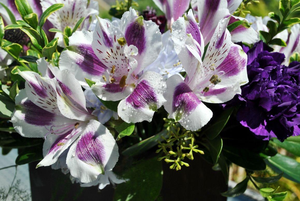 Hoa ly ngày Tết rất được ưa chuộng