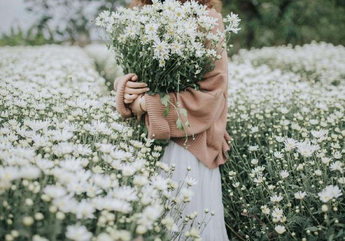 Cách bó hoa cúc họa mi đẹp, đơn giản