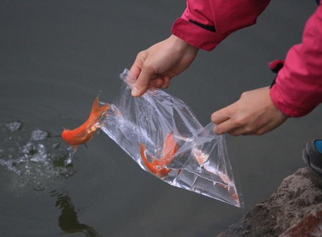 Phong tục thả cá chép cúng ông Công ông Táo trong dịp Tết Âm lịch