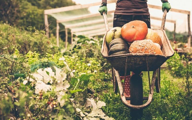 Thực phẩm hữu cơ organic và thực phẩm sạch có phải là một?