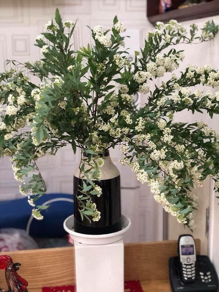 Cách cắm hoa tiểu tú cầu