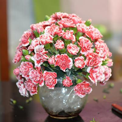 Bình hoa cẩm chướng