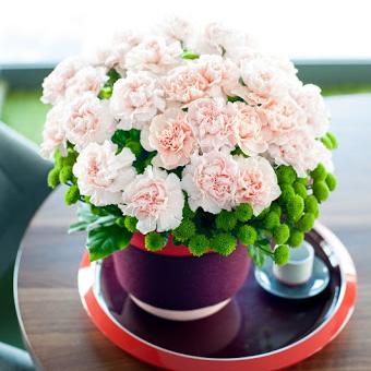 Hoa cẩm chướng để bàn sang trọng