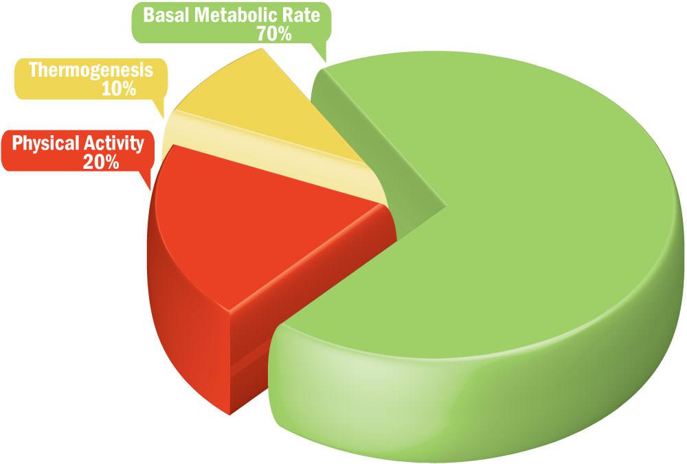 BMR chiếm khoảng 70% tổng lượng calories