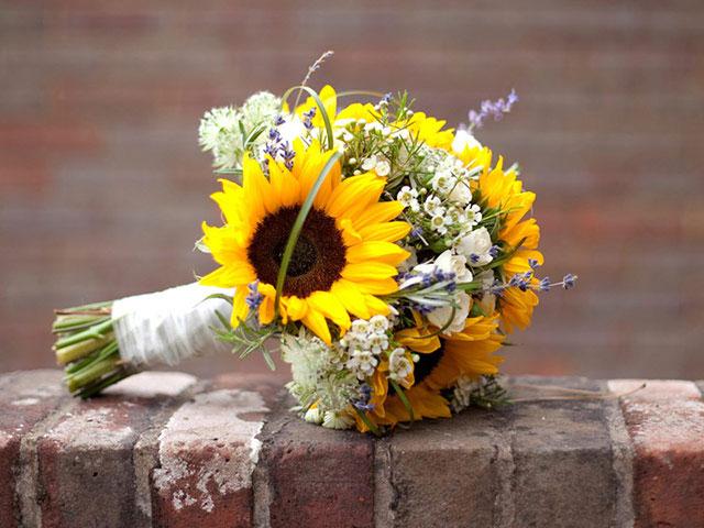 Giá hoa hướng dương
