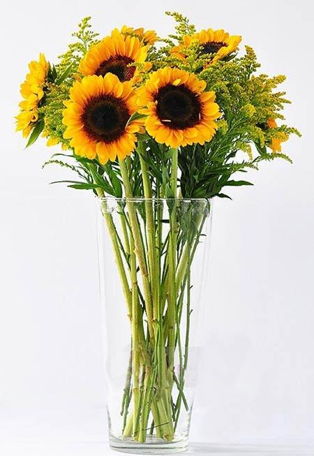 Cách cắm hoa hướng dương 10 bông