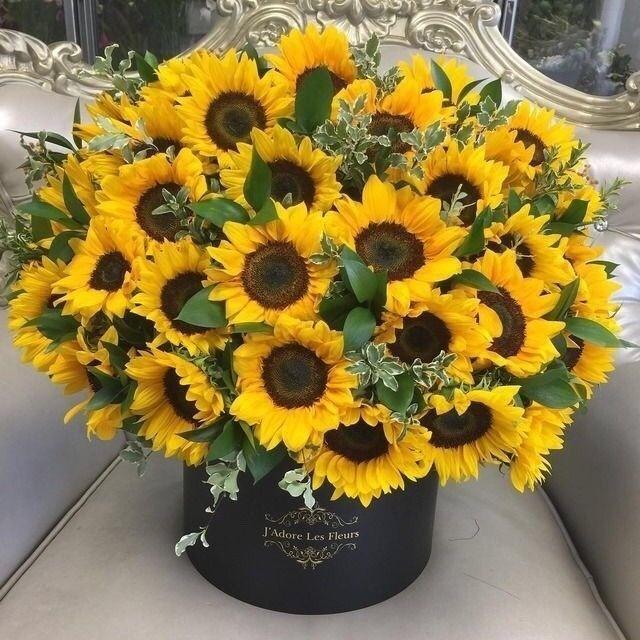 Hoa hướng dương sinh nhật