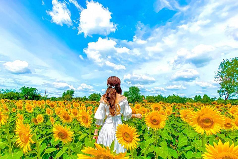 Cách chụp ảnh đẹp với hoa hướng dương