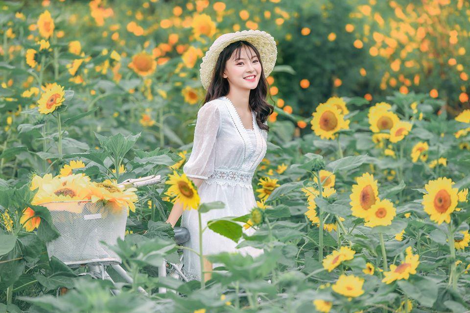 Hoa hướng dương nở mùa nào?