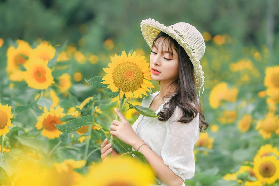 Chụp ảnh với hoa hướng dương