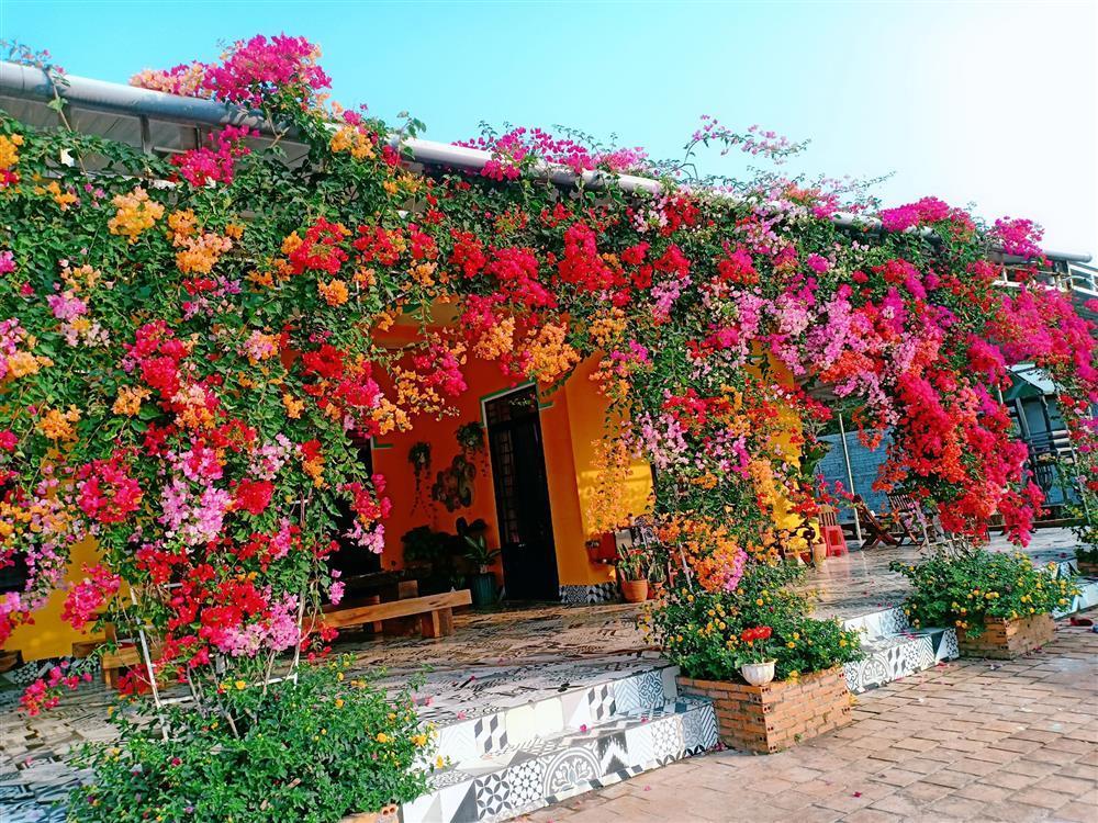 Cách trồng hoa giấy ngũ sắc
