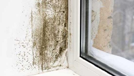 Cửa sổ thấm mưa nên ẩm mốc.