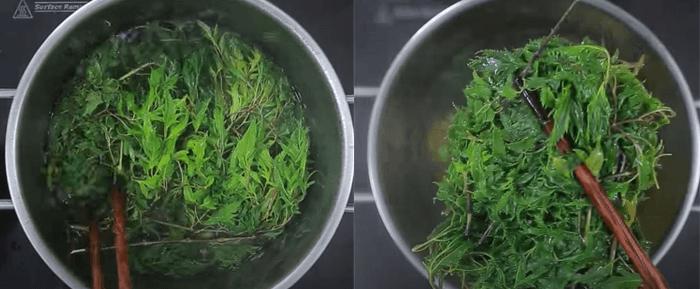 lá đinh lăng có tác dụng gì? uống nước lá đinh lăng hàng ngày có tốt không?
